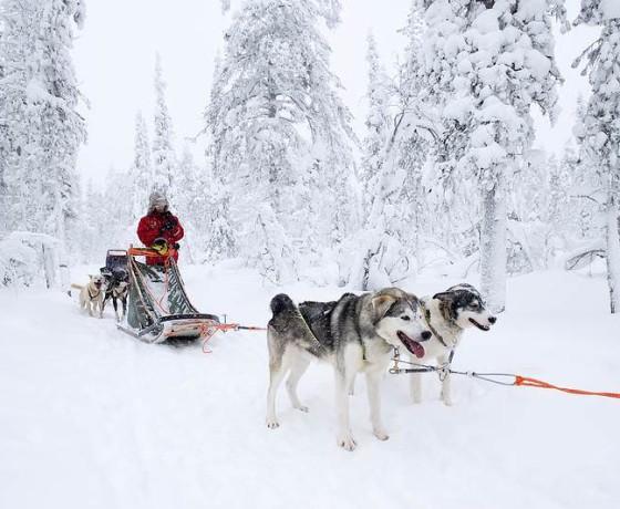 Zimowe szaleństwo, Finlandia - oferta, biuro podróży
